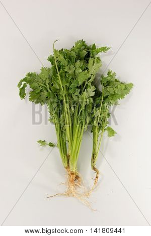 Fresh parsley isolated on a  white backgroud