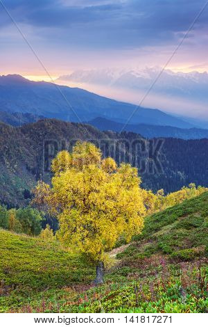 Birch with yellow leaves in the mountains. Autumn landscape at sunrise. A beautiful ray of sunshine over the tops. Art processing of photographs, color toning