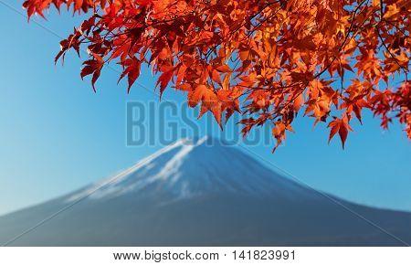 Autumn Maple Leaves With Mount Fuji At Lake Kawaguchiko, Japan