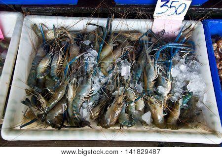 Fresh shrimp Thailand in market, many shrimp
