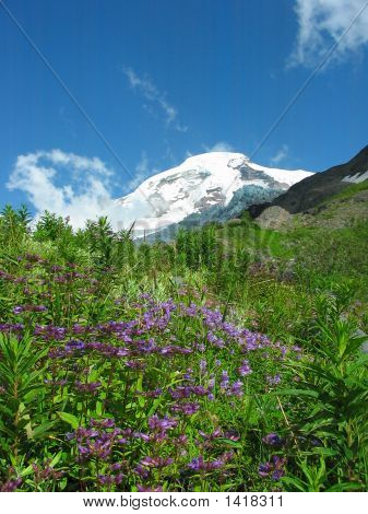 Mount Baker In Summer