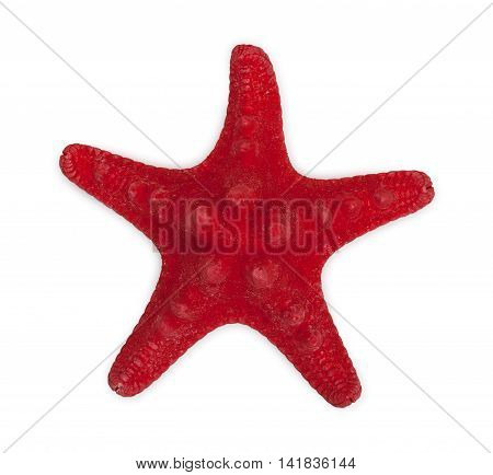 Red Sea Star Isolated On White Bacground