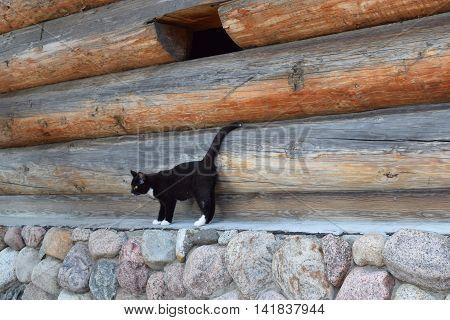 Black cat on a background log walls