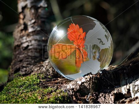 Red dry leaf strawberries - a reflection inside a transparent ball in the forest. The concept of the year autumn ecology environment