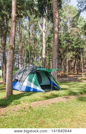 Dome Tent Camping In Forest