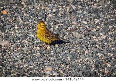Tiny yellow bird in the Southern Scenic Route New Zealand