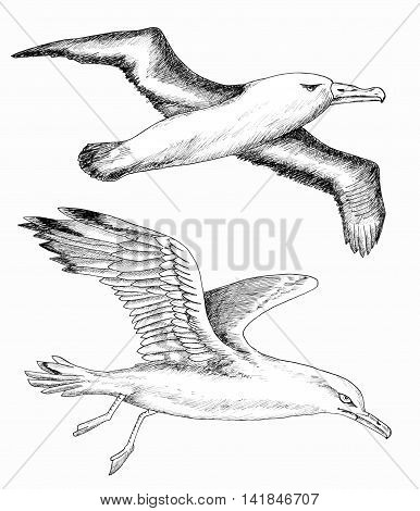 Design set with black and white hand drawn silhouettes of flying gulls