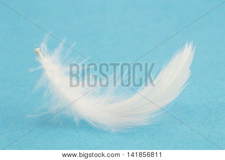 Single white feather on a blue background