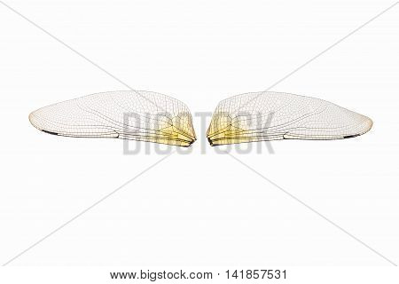 dragonfly transparent wings isolated on white with clipping path
