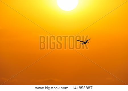 Bird silhouette is a single bird flying over the ocean water as sun rays burst forth from the sun in a vivid surreal colorful scenic seascape.
