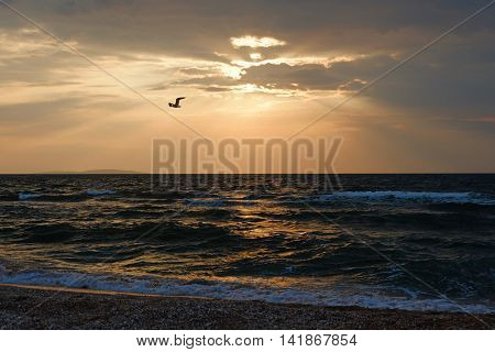 Stormy sea weather and lonely seagull hover in front of sunset sky full of warm light, toned image instagram color filter