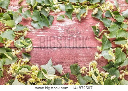 blossoming linden branch on a wooden board. branches arranged in a circle. there is a place for text