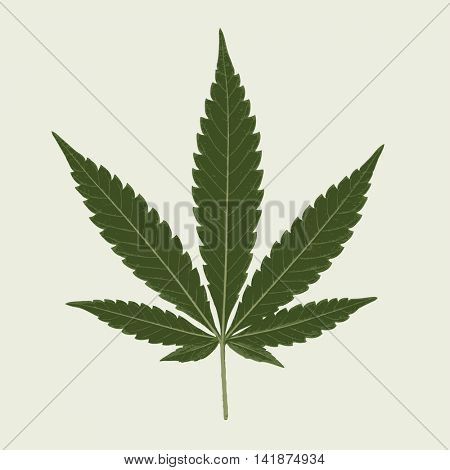 Cannabis marijuana hemp leaf flat icon vector green medicine weed vector herb