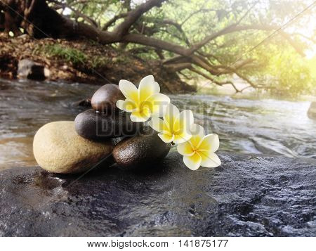 Flower Plumeria Or Frangipani With Pebble On Big Stone At Waterfall