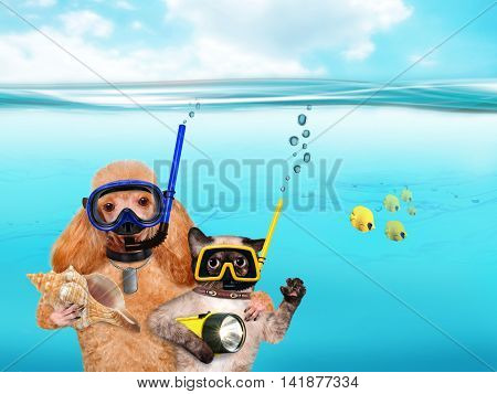 Dog with a cat divers underwater. Humor.