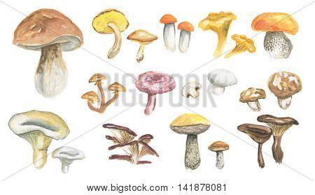 Watercolor mushrooms set. Healthy food, autumn nature concept. Delicious edible mushrooms.