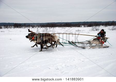 REVDA, RUSSIA - MARCH, 2012: Celebration of North - reindeer team races on snow
