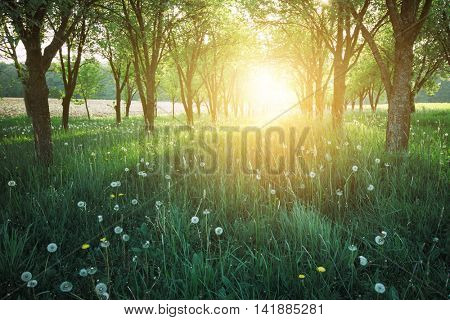 Sunshine in park