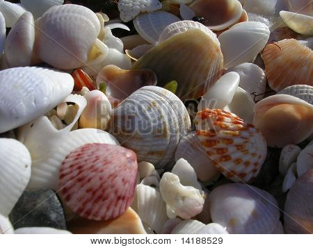Tropical Shells On The Beach