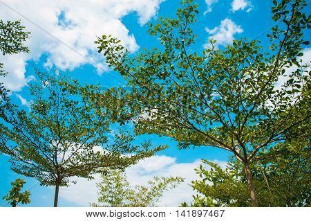 Photo of the Crowns trees against blue sky on tropical beach