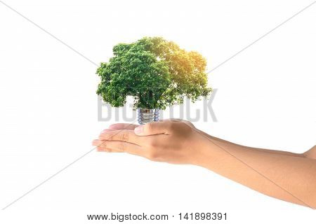 Human hands holding the energy saving lamp of tree on white background.Concept for saving energy, global warming, Earth Day, Go Green and save the world.