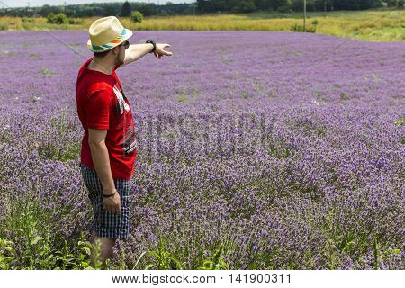tourist in lavender field shows his hand into the distance