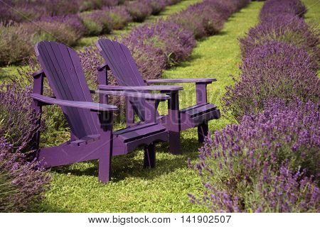2 purple chair in a middle of a lavender field