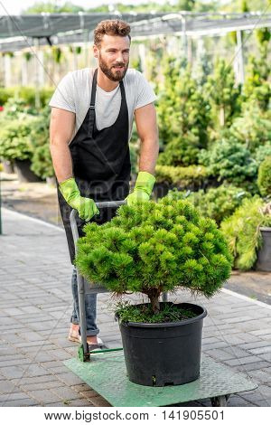 Handsome flower seller carrying a tree with trolley in the plant store. Customer service and delivery in the flowers shop