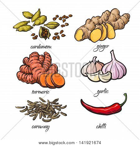 Set of spices - garlic, ginger, turmeric, cardamom, chili, caraway, isolated sketch style illustration on white background. Traditional cooking spices in Asian and Indian cuisine
