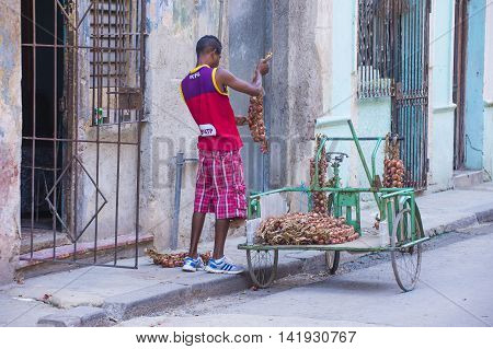 HAVANA CUBA - JULY 18 : A Cuban onion seller in old Havana street on July 18 2016. The historic center of Havana is UNESCO World Heritage Site since 1982.