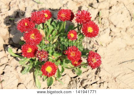small red flowers grew among the solid dry soil