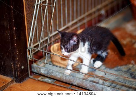 adorable cute little black and white pussycat in a cage