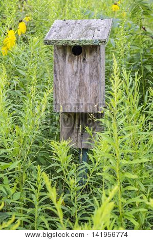 Wooden Bird House Surrounded by Plants in the Outdoors