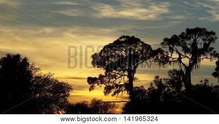 Tree silhouette at sunset in Fort Myers, Florida