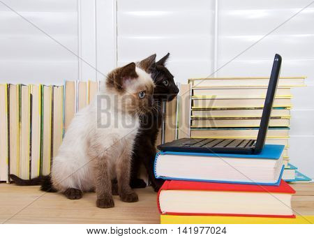 Siamese kitten with blue eyes sitting next to Black kitten with green eyes looking intently at miniature laptop type computer. Books in background. Copy space. fun technology education concept