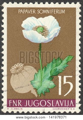 MOSCOW RUSSIA - CIRCA MAY 2016: a post stamp printed in YUGOSLAVIA shows a Papaver somniferum flower the series