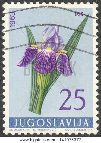 MOSCOW RUSSIA - CIRCA MAY 2016: a post stamp printed in YUGOSLAVIA shows a Iris germanica flower the series