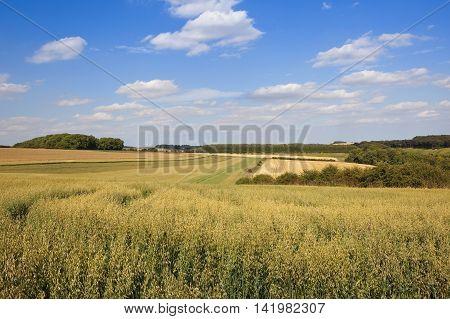 Yorkshire Oat Fields