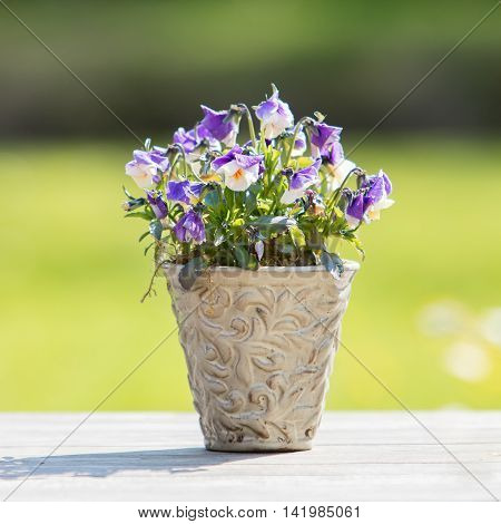 Flowers in pot on wooden garden table