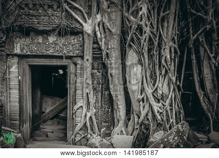 Massive tree roots engulfing an entrance to one of the temples in Angkor Wat complex near Siem Reap in Cambodia