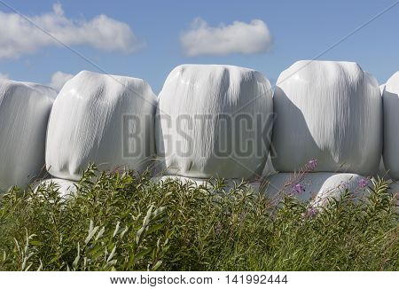 Silage Balls Close Up with vegetation in the foreground.