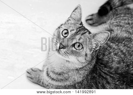 Young curious cat looking up in black and white photo, cat on a bottom of bathroom, B&W photo