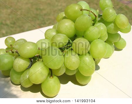 Bunch  Of Green Seedless Wine Making Grapes 01