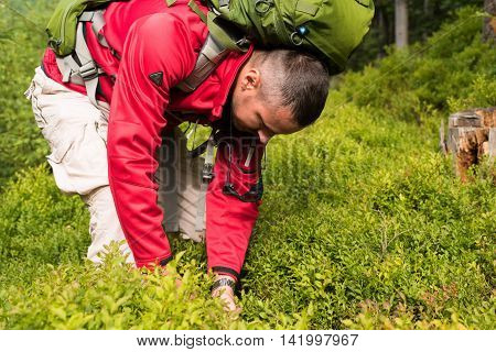 Hungry hiker with a big backpack eat blueberries hands. Traveler eating berries in the forest on the hillside.