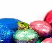 Dwarf Green Tree Frog Sitting On Small Solid Easter Egg poster