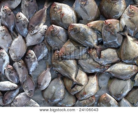 Small Flat Fish On Sale At Market
