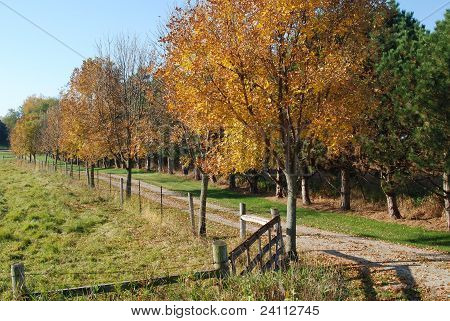 A rural scene with autumn trees and a fence