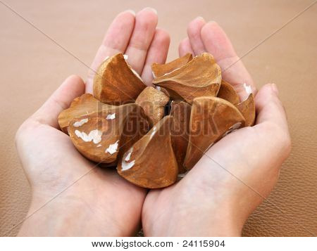 Handful Of Exotic Palm Seeds