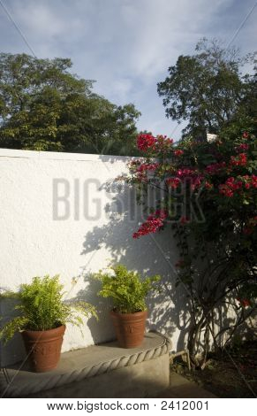 Tropical Flowers White Wall
