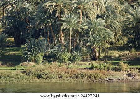 Waterside Nile Vegetation
